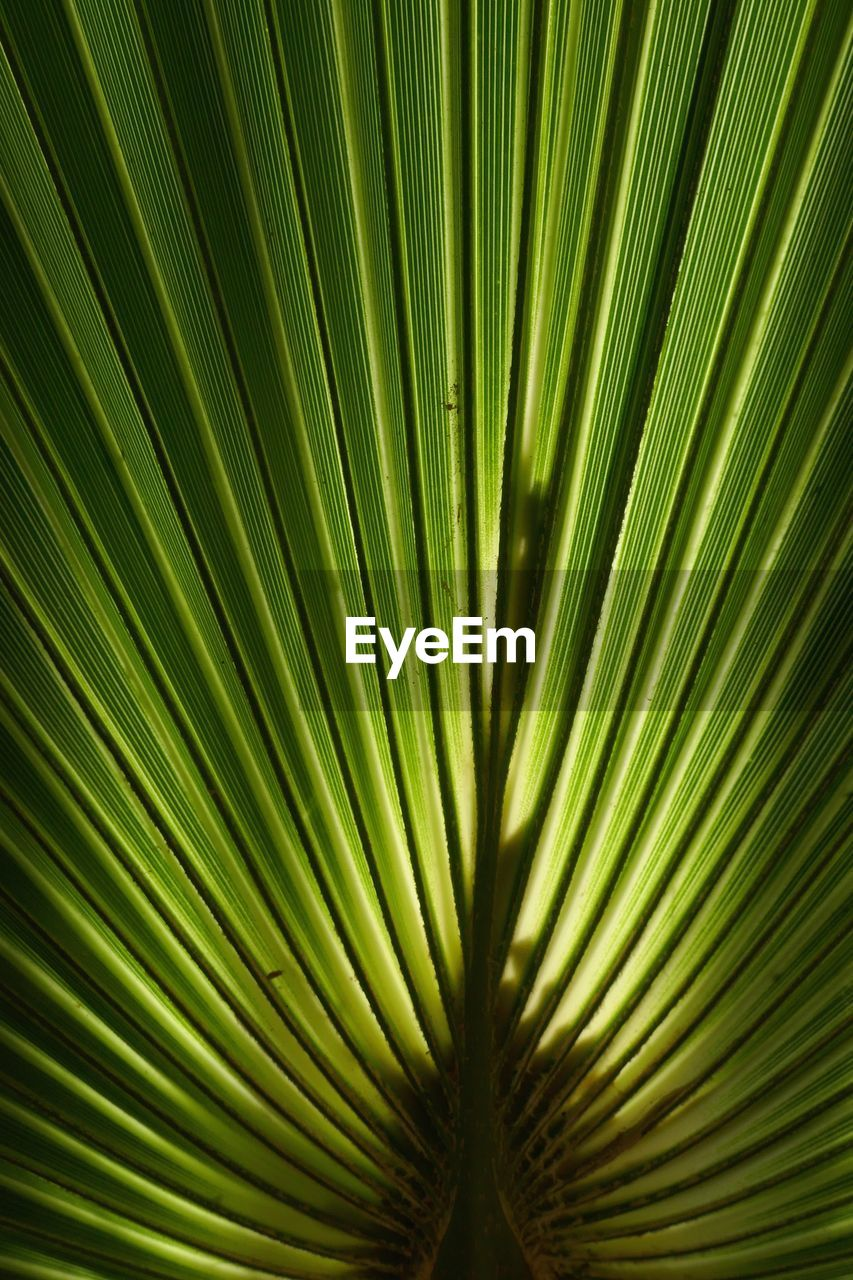 leaf, plant part, palm leaf, palm tree, plant, growth, pattern, frond, backgrounds, tree, close-up, green color, tropical climate, natural pattern, no people, nature, full frame, beauty in nature, textured, outdoors, abstract, leaves, rainforest
