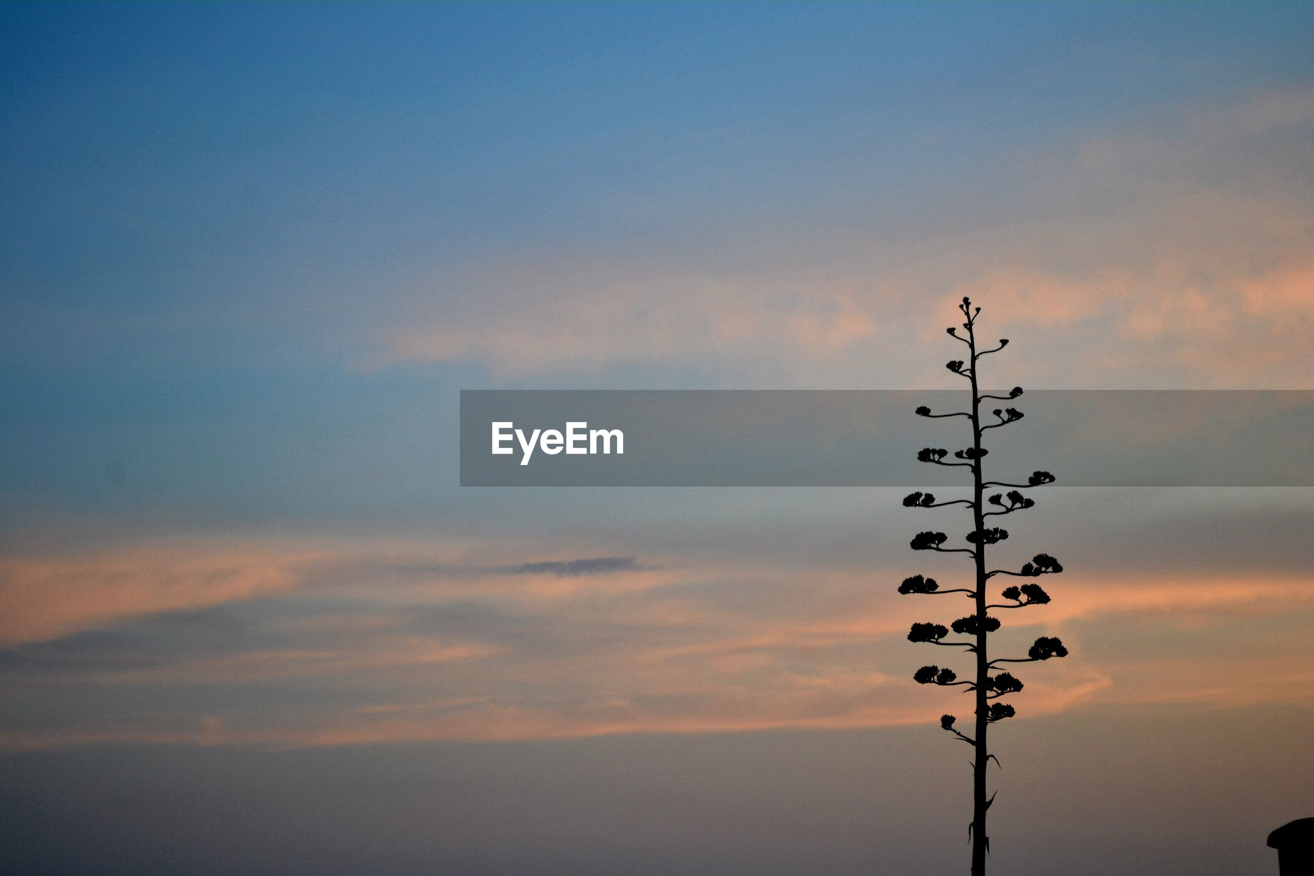 LOW ANGLE VIEW OF SILHOUETTE BIRDS ON ORANGE SKY