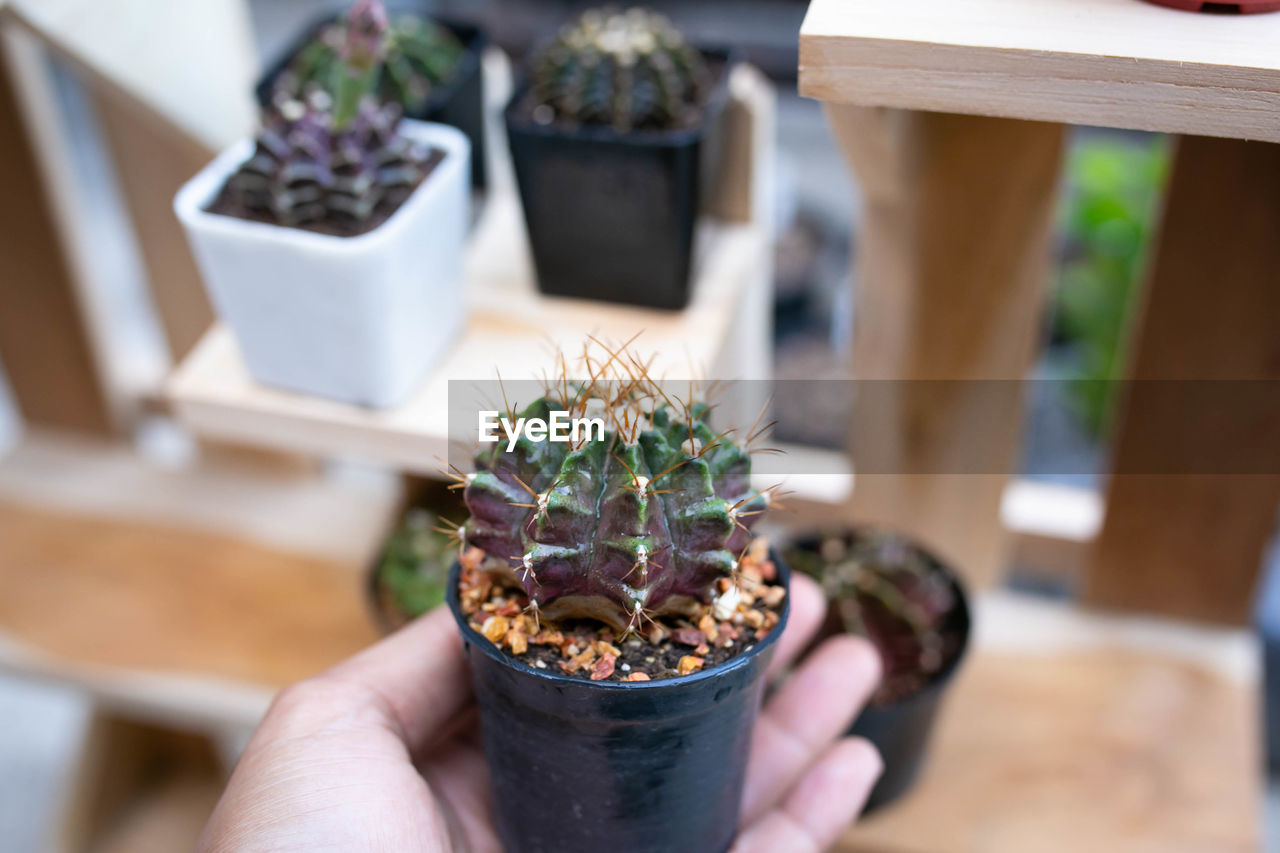 MIDSECTION OF PERSON HOLDING SMALL POTTED PLANT