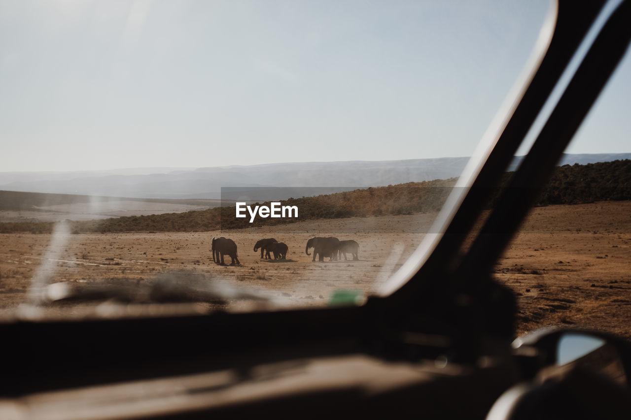 Elephants On Landscape Seen Through Car Windshield
