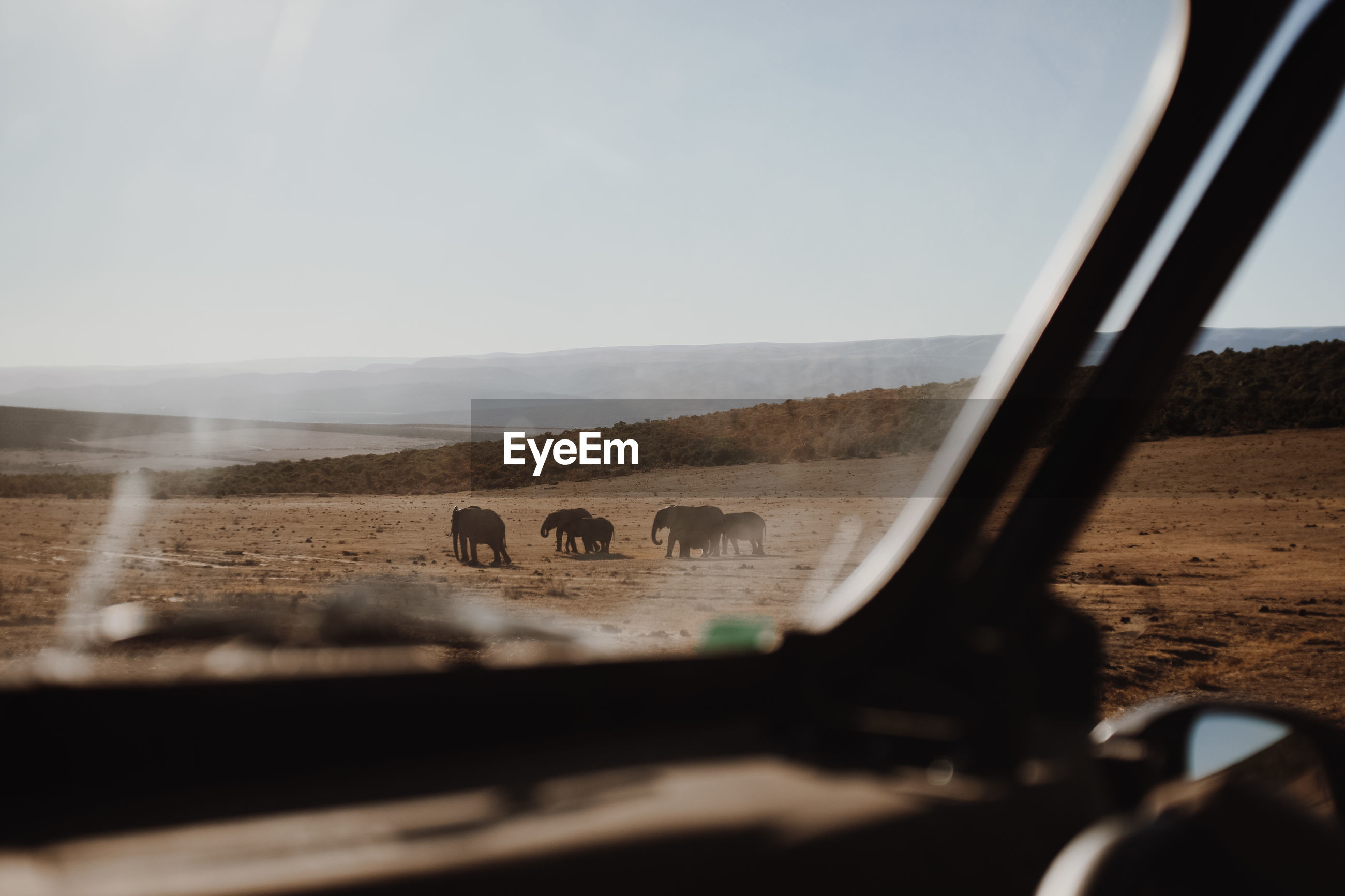 Elephants on landscape seen through car windshield