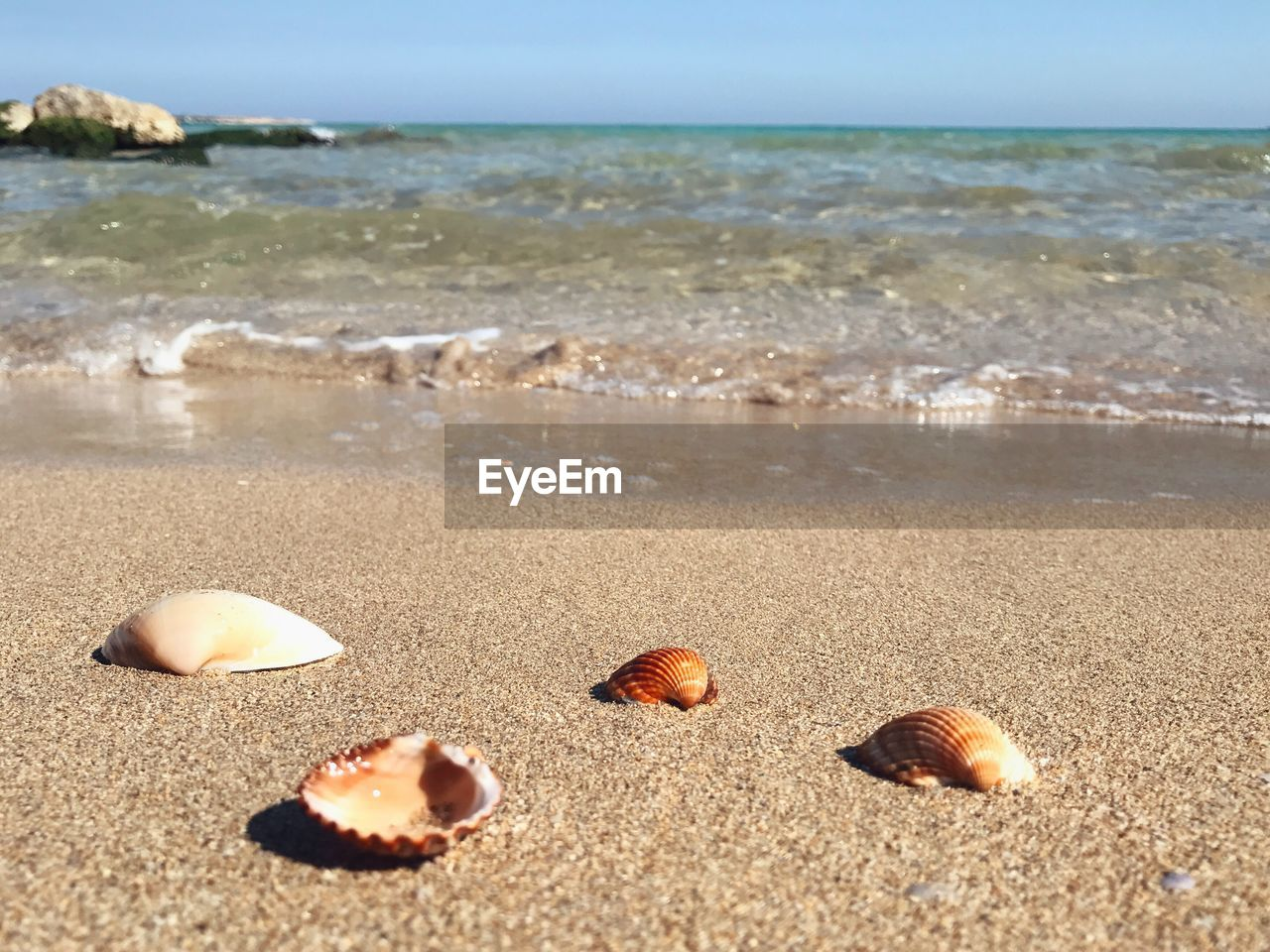 beach, sea, sand, shore, nature, horizon over water, beauty in nature, day, outdoors, water, tranquility, seashell, tranquil scene, scenics, no people, pebble beach, close-up, sky