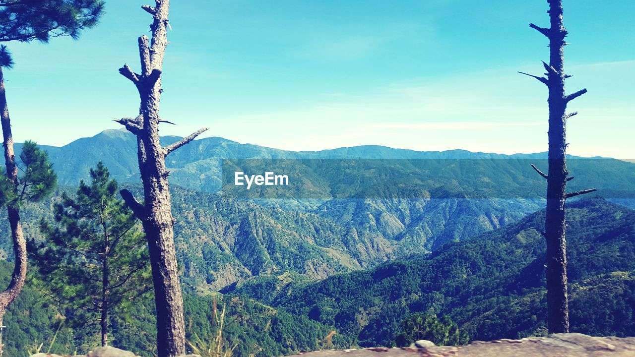 mountain, nature, no people, tree, outdoors, day, beauty in nature, sky