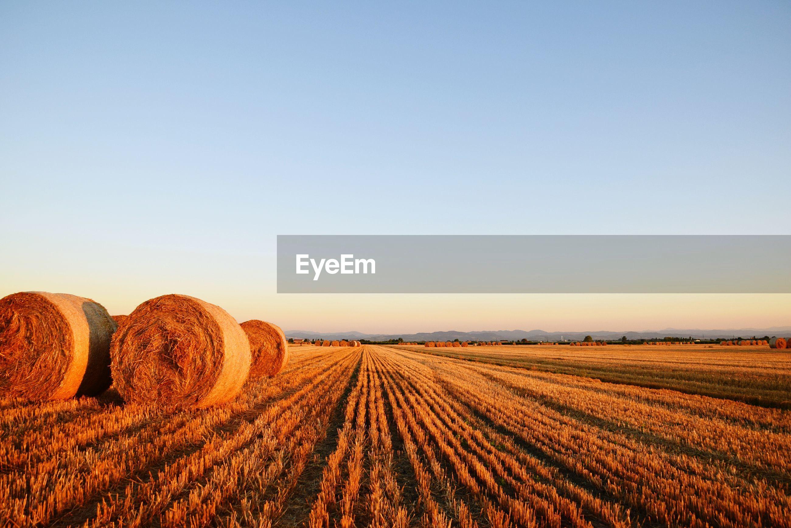 Hay bales on farm against clear sky