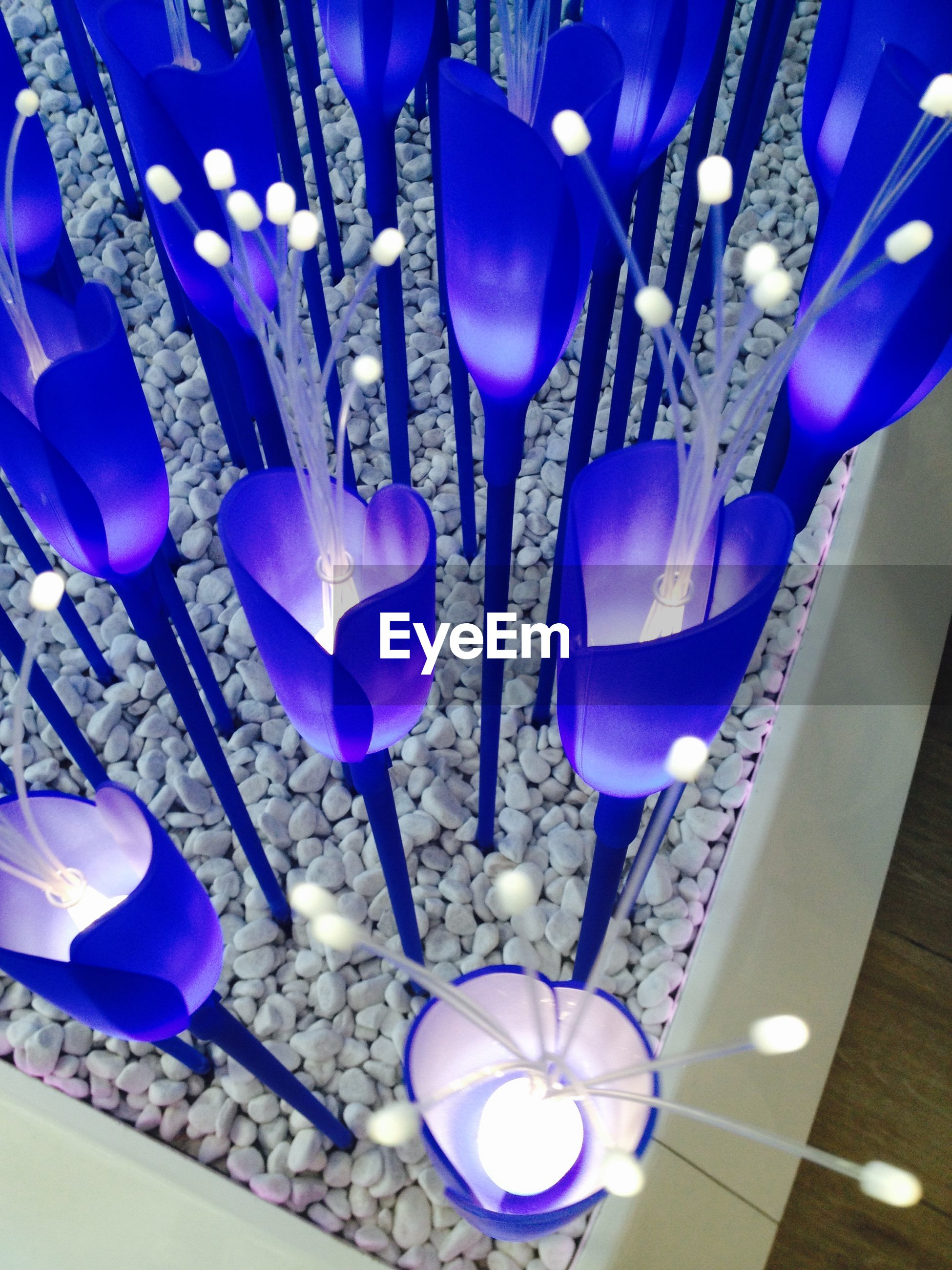 indoors, hanging, flower, blue, purple, variation, decoration, close-up, still life, large group of objects, lighting equipment, fragility, no people, multi colored, arrangement, illuminated, abundance, high angle view, electricity, vase