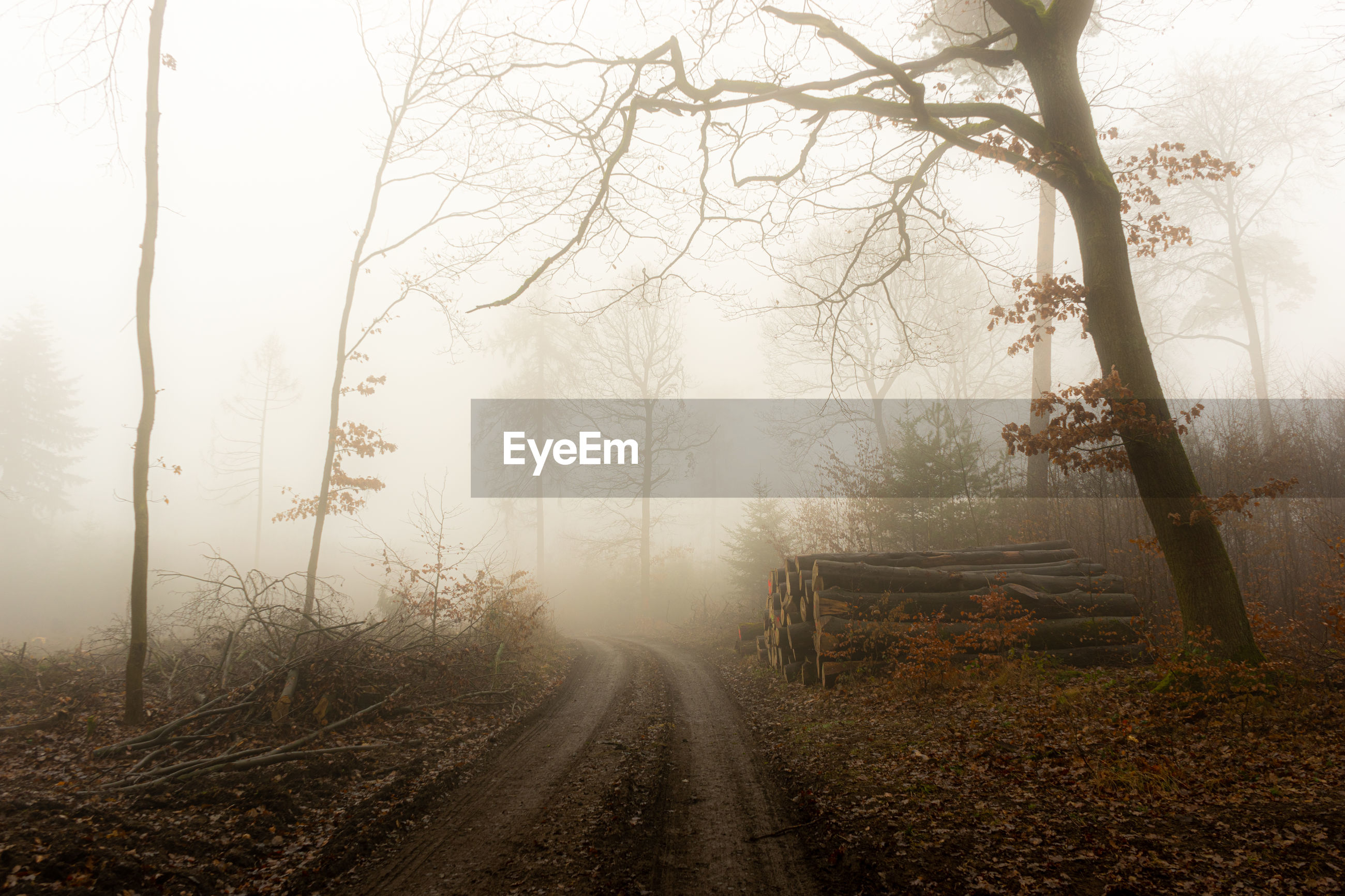 ROAD AMIDST TREES IN FOGGY WEATHER