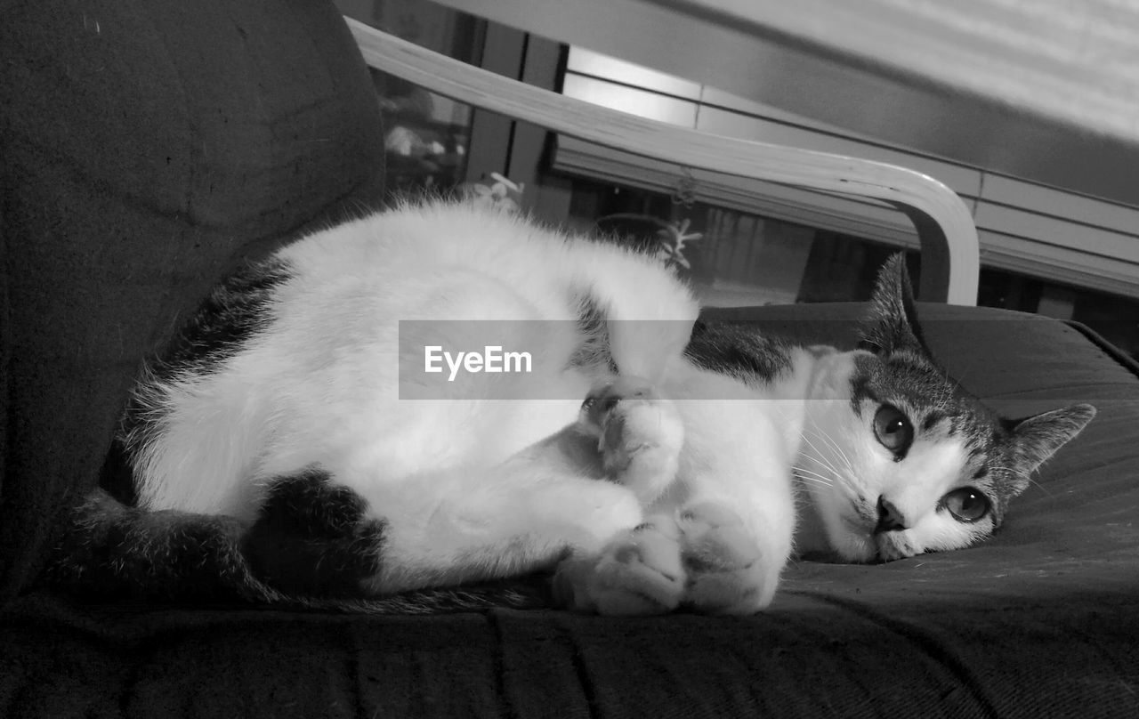 domestic cat, pets, domestic animals, feline, animal themes, cat, mammal, no people, indoors, lying down, one animal, relaxation, day, close-up