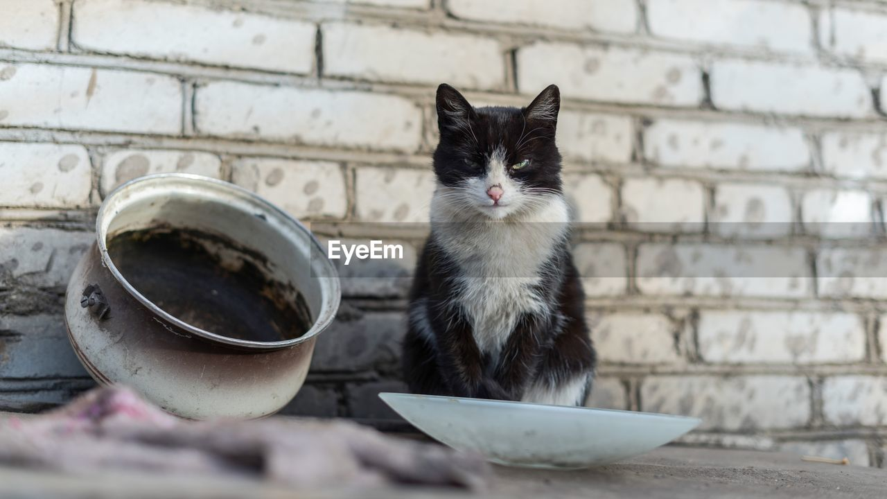 domestic, pets, domestic animals, cat, animal themes, animal, one animal, feline, mammal, domestic cat, vertebrate, bowl, no people, focus on foreground, wall - building feature, day, sitting, container, whisker, looking, animal head