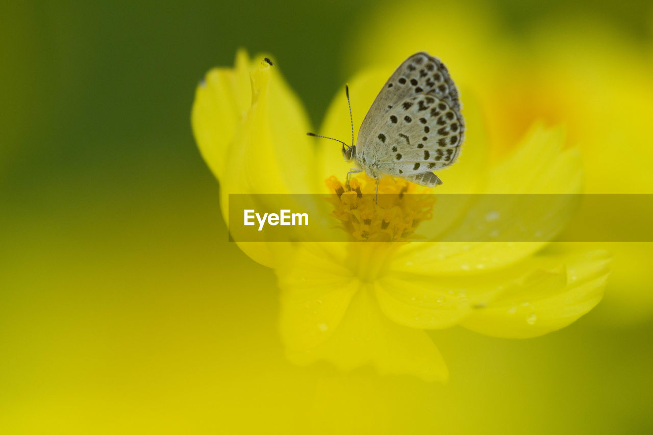 insect, animals in the wild, flower, yellow, animal themes, one animal, fragility, petal, nature, beauty in nature, freshness, animal wildlife, close-up, plant, no people, growth, flower head, outdoors, day, pollination, full length
