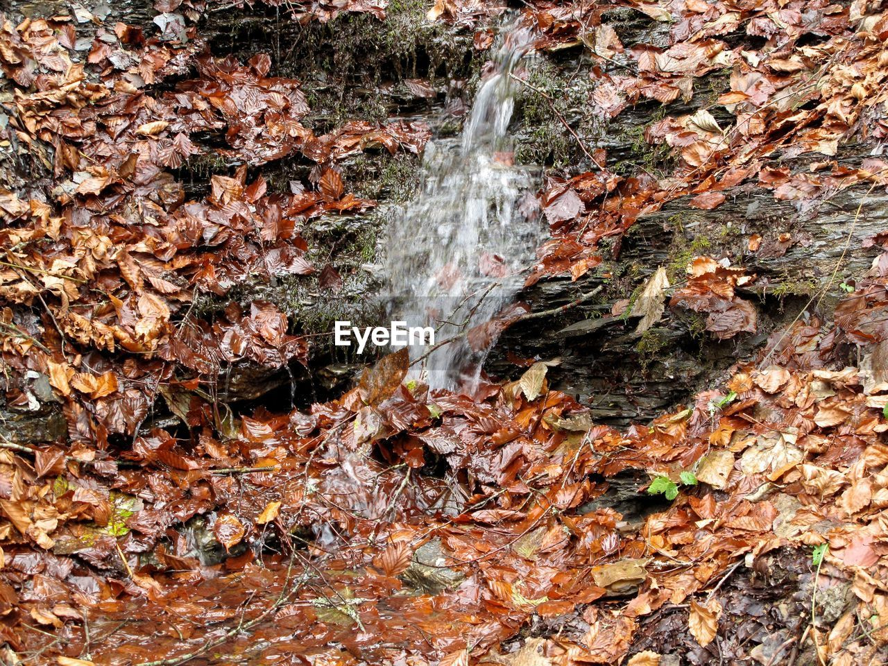 Close-Up Of Waterfall In Forest During Autumn
