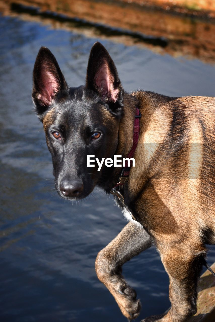 CLOSE-UP PORTRAIT OF DOG AT RIVERBANK