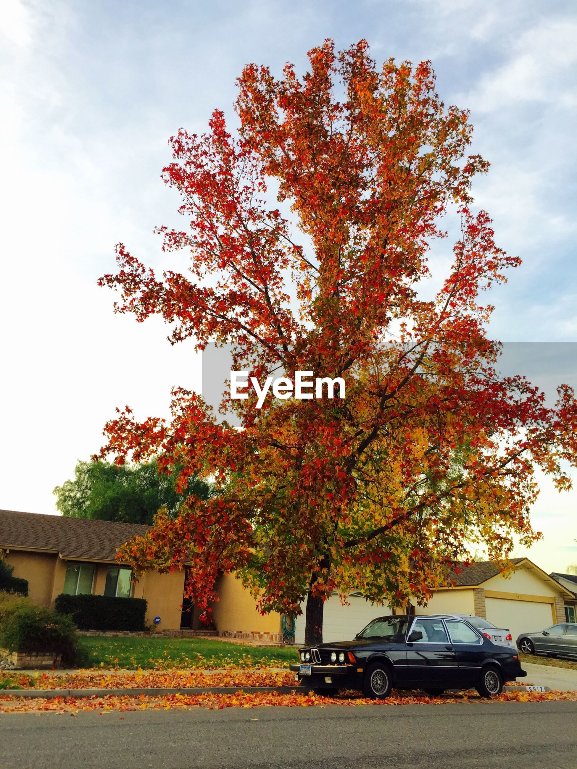 Autumnal tree and car in front of houses