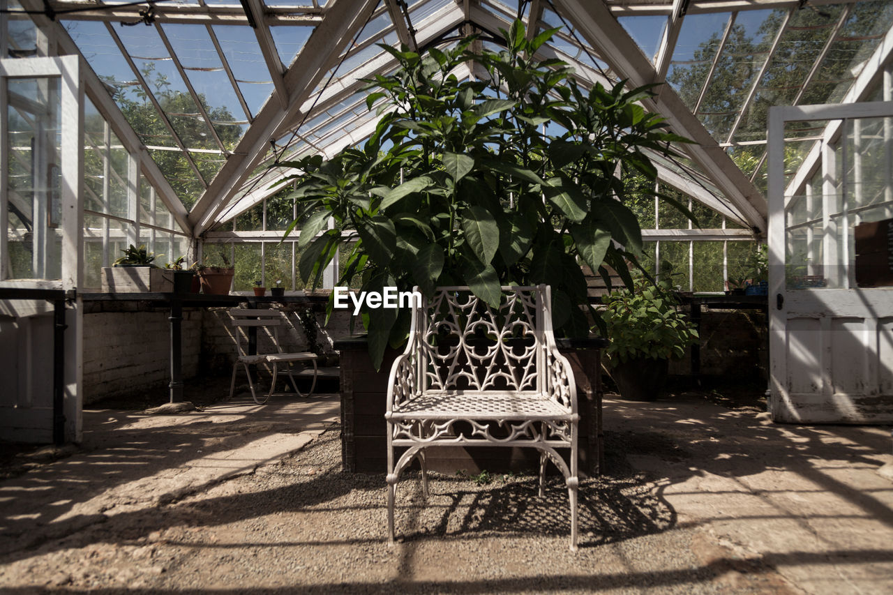 plant, absence, nature, seat, day, architecture, no people, built structure, sunlight, growth, tree, shadow, indoors, chair, greenhouse, empty, furniture, potted plant, table, luxury