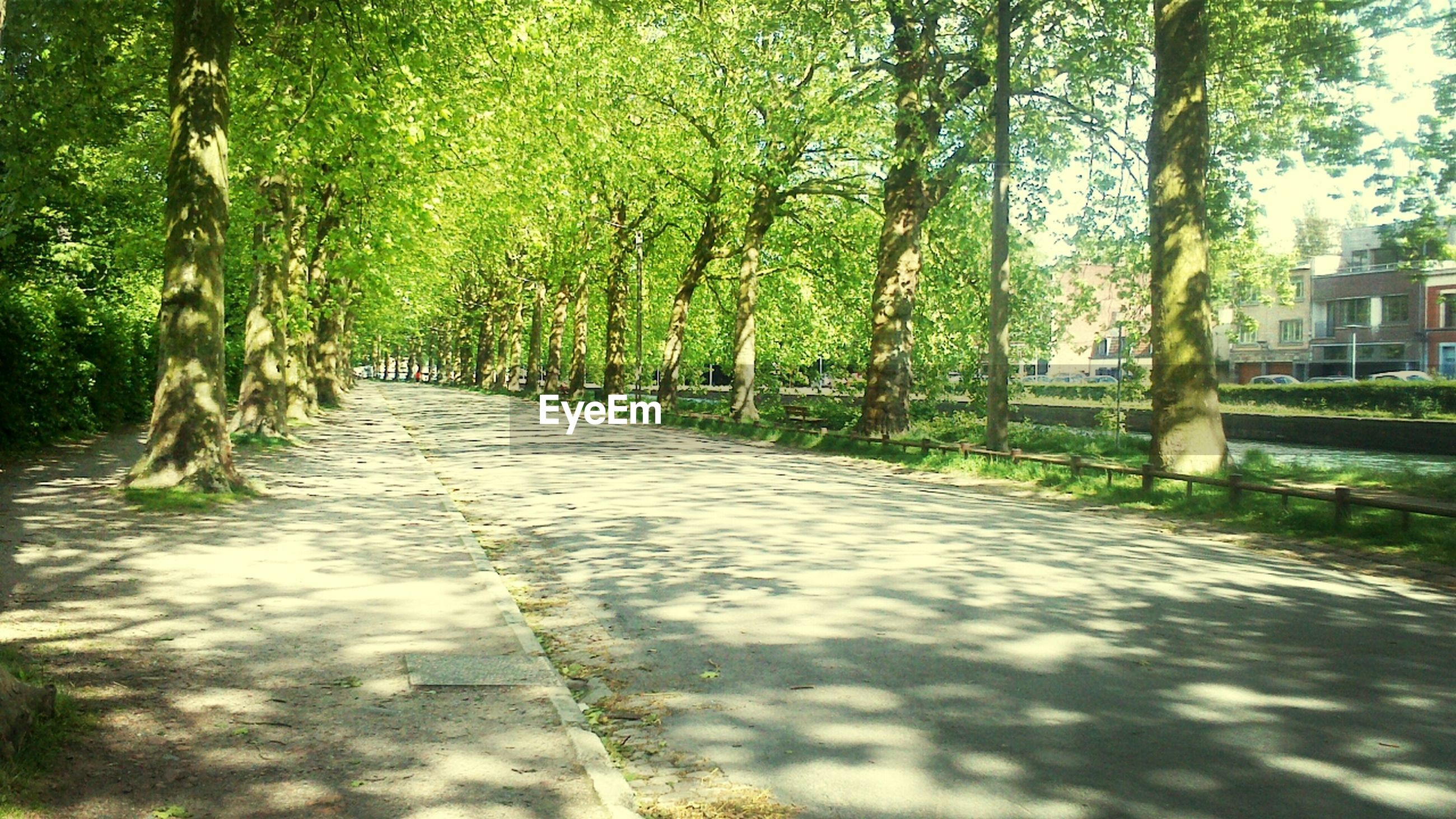 tree, the way forward, treelined, diminishing perspective, footpath, growth, vanishing point, road, tranquility, green color, street, nature, tree trunk, pathway, shadow, park - man made space, transportation, sunlight, dirt road, walkway