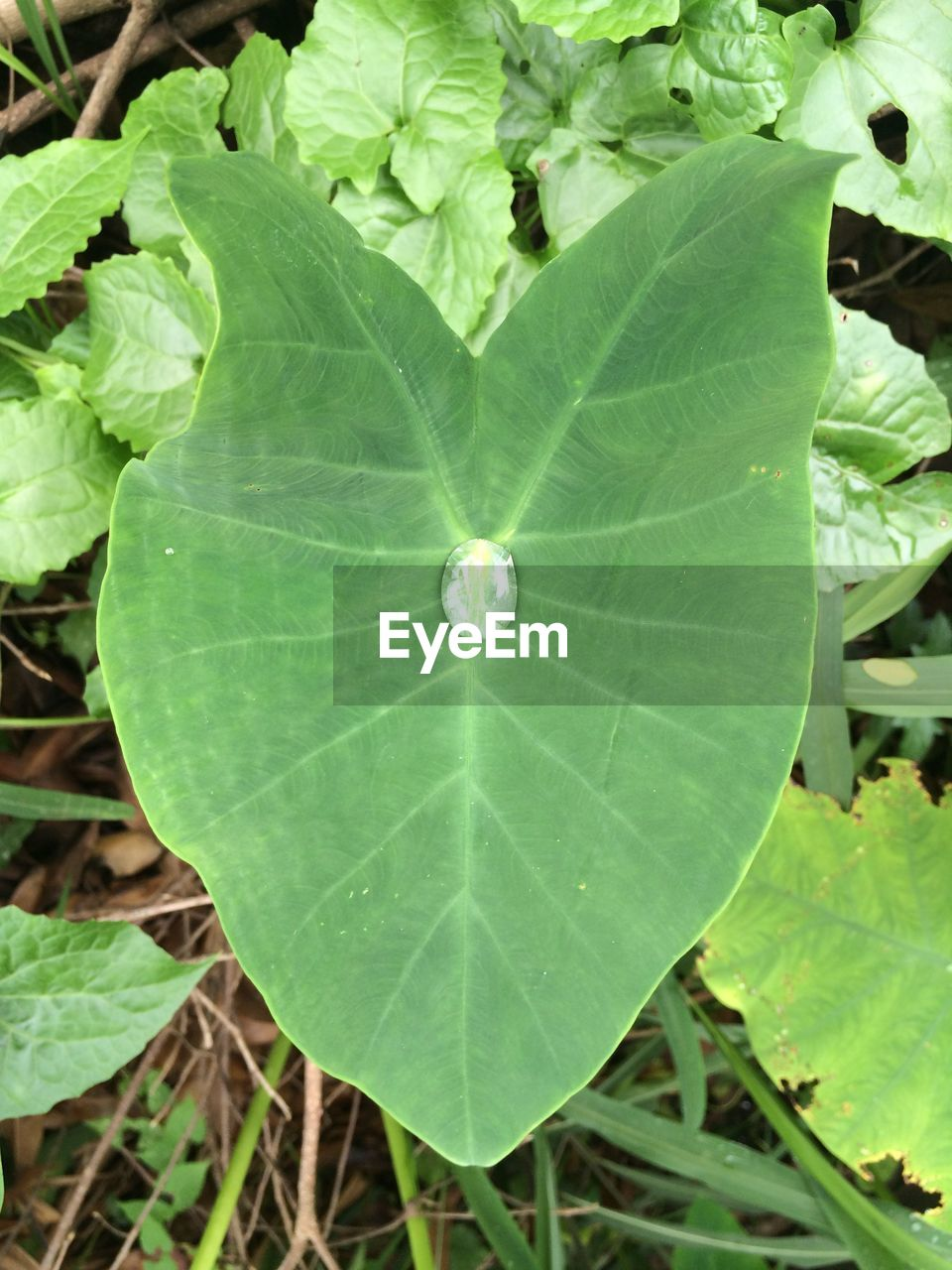leaf, green color, high angle view, nature, plant, close-up, growth, outdoors, day, beauty in nature, no people, fragility, one animal, freshness, animal themes