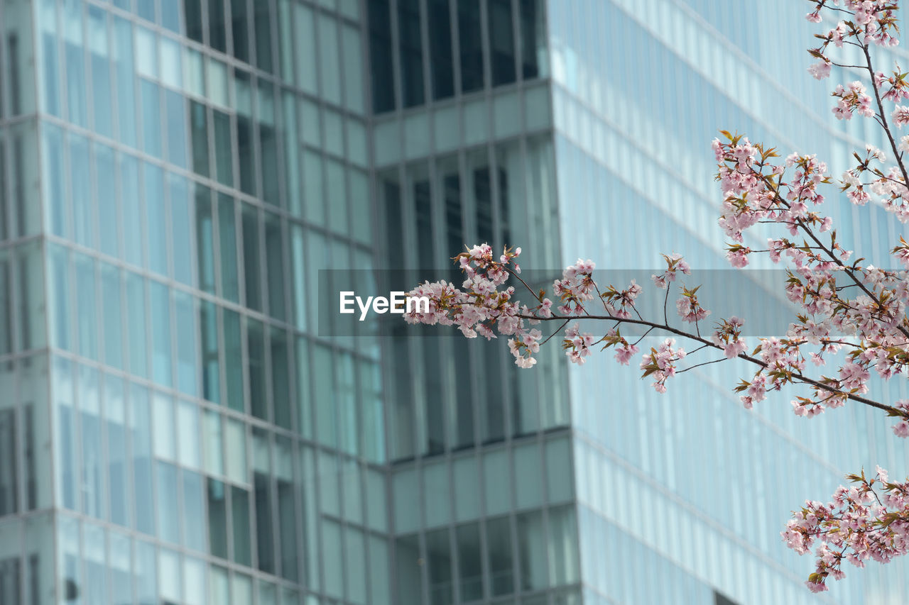 LOW ANGLE VIEW OF CHERRY TREE BY BUILDING