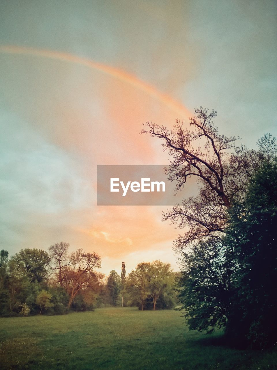 tree, beauty in nature, rainbow, nature, tranquil scene, sky, scenics, tranquility, idyllic, no people, field, outdoors, grass, landscape, double rainbow, cloud - sky, day, sunset, growth, scenery