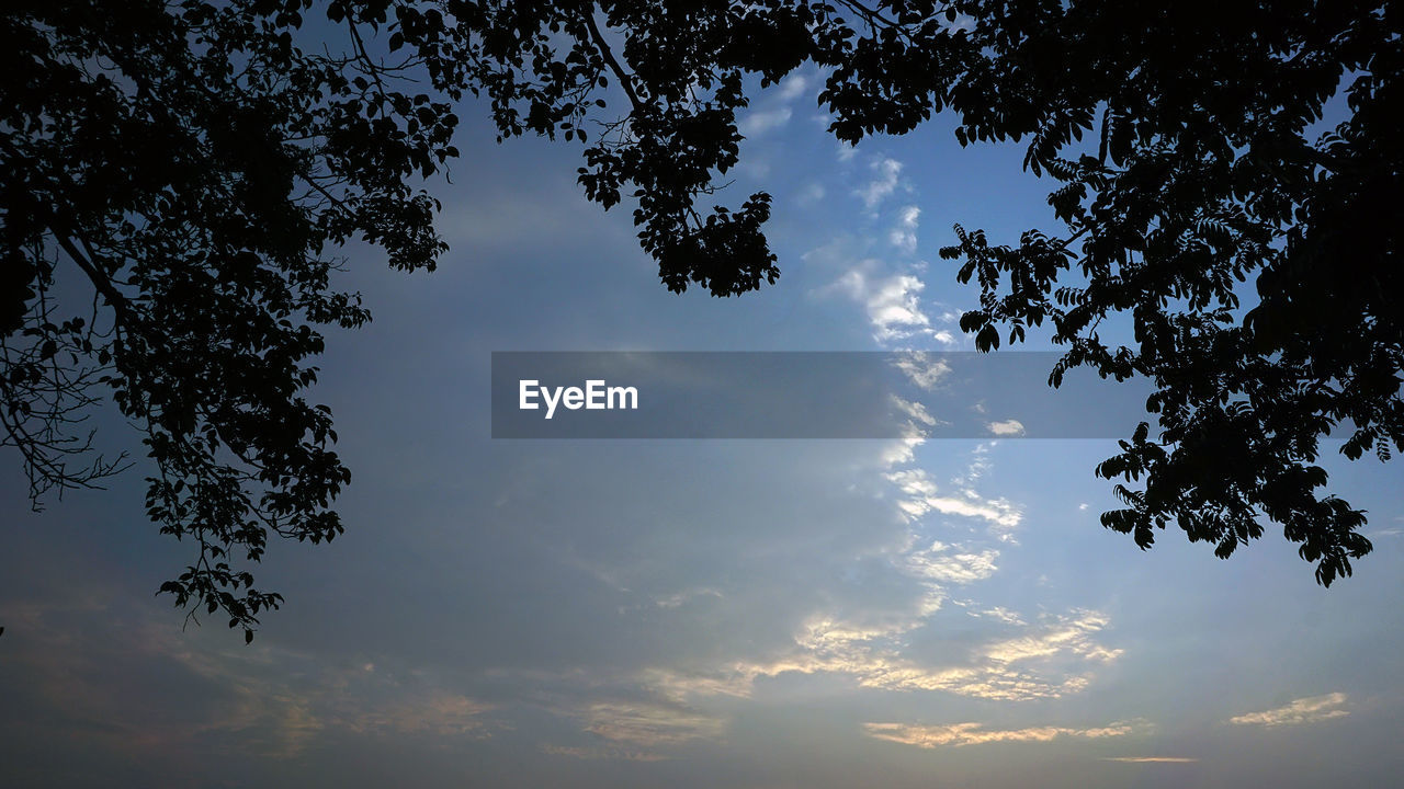 tree, low angle view, sky, nature, beauty in nature, silhouette, no people, tranquility, outdoors, cloud - sky, scenics, growth, branch, sunset, day