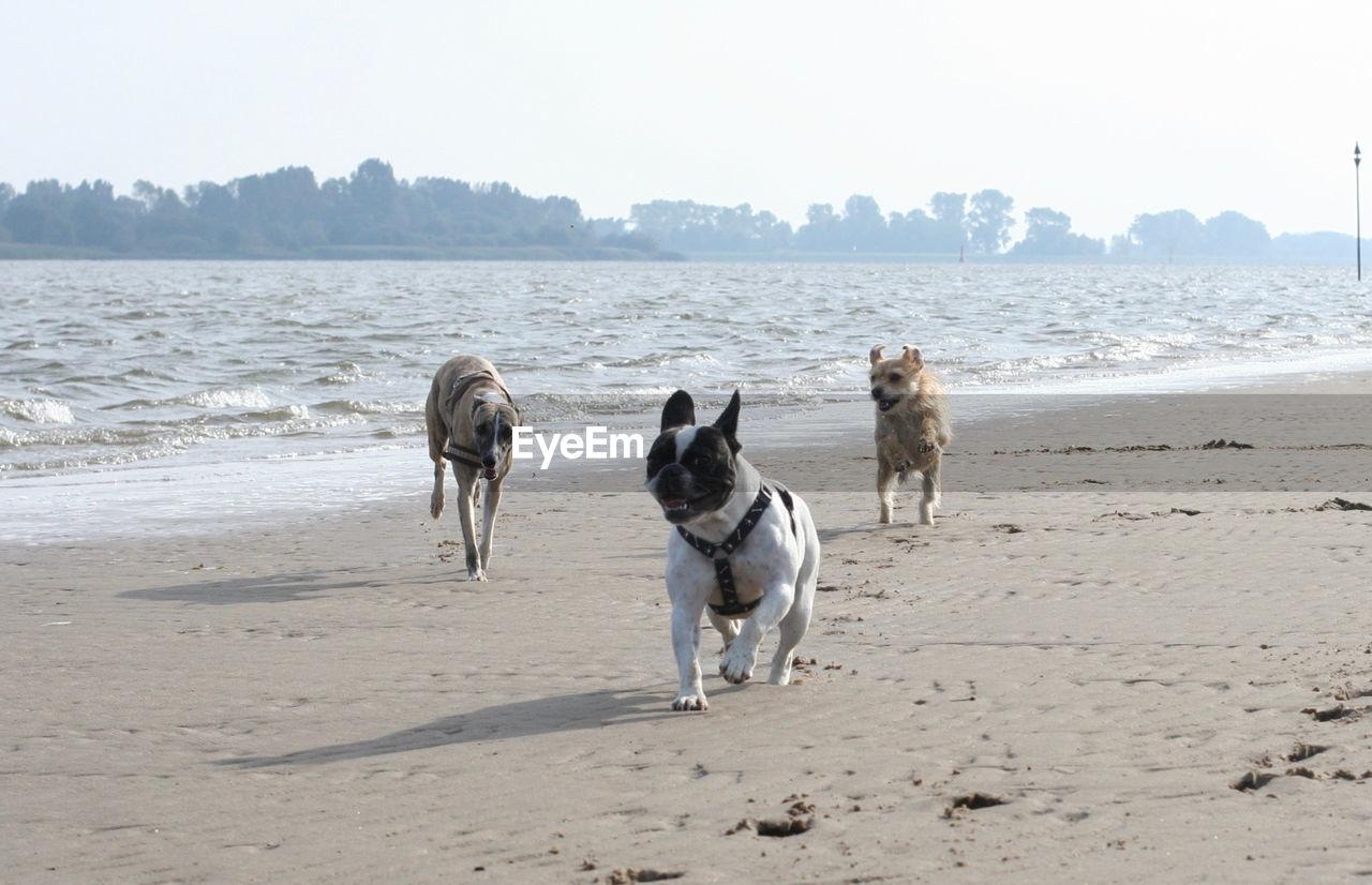 Dogs Running On Beach Against Sky