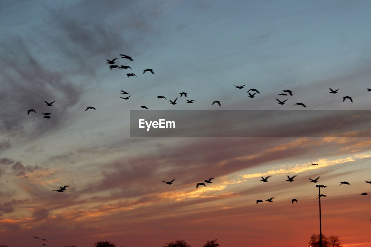 large group of animals, flying, bird, flock of birds, animals in the wild, animal themes, sky, sunset, migrating, animal wildlife, mid-air, cloud - sky, silhouette, nature, beauty in nature, outdoors, no people, togetherness, low angle view, spread wings, day
