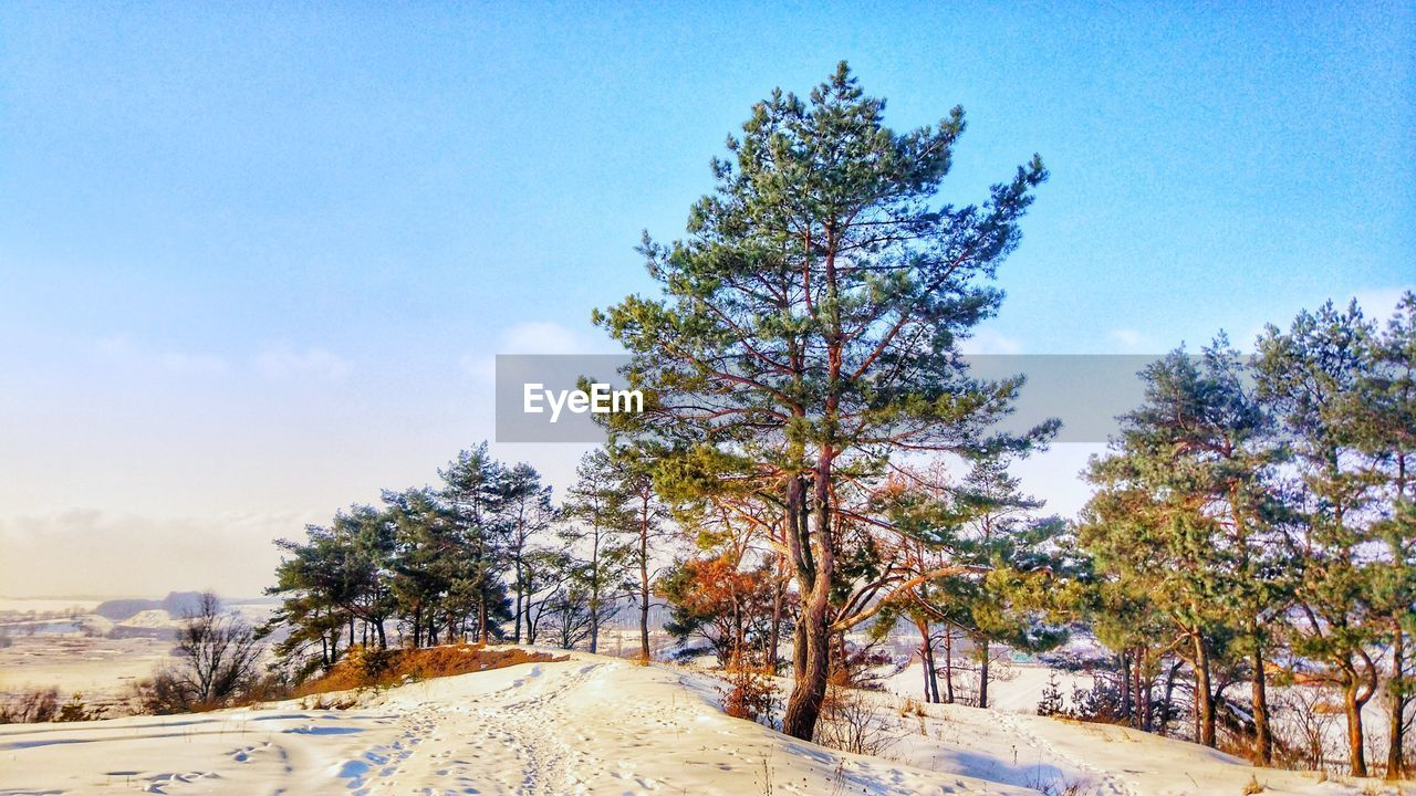 tree, sky, plant, snow, winter, cold temperature, road, tranquility, tranquil scene, beauty in nature, direction, nature, the way forward, no people, scenics - nature, day, transportation, non-urban scene, land, outdoors