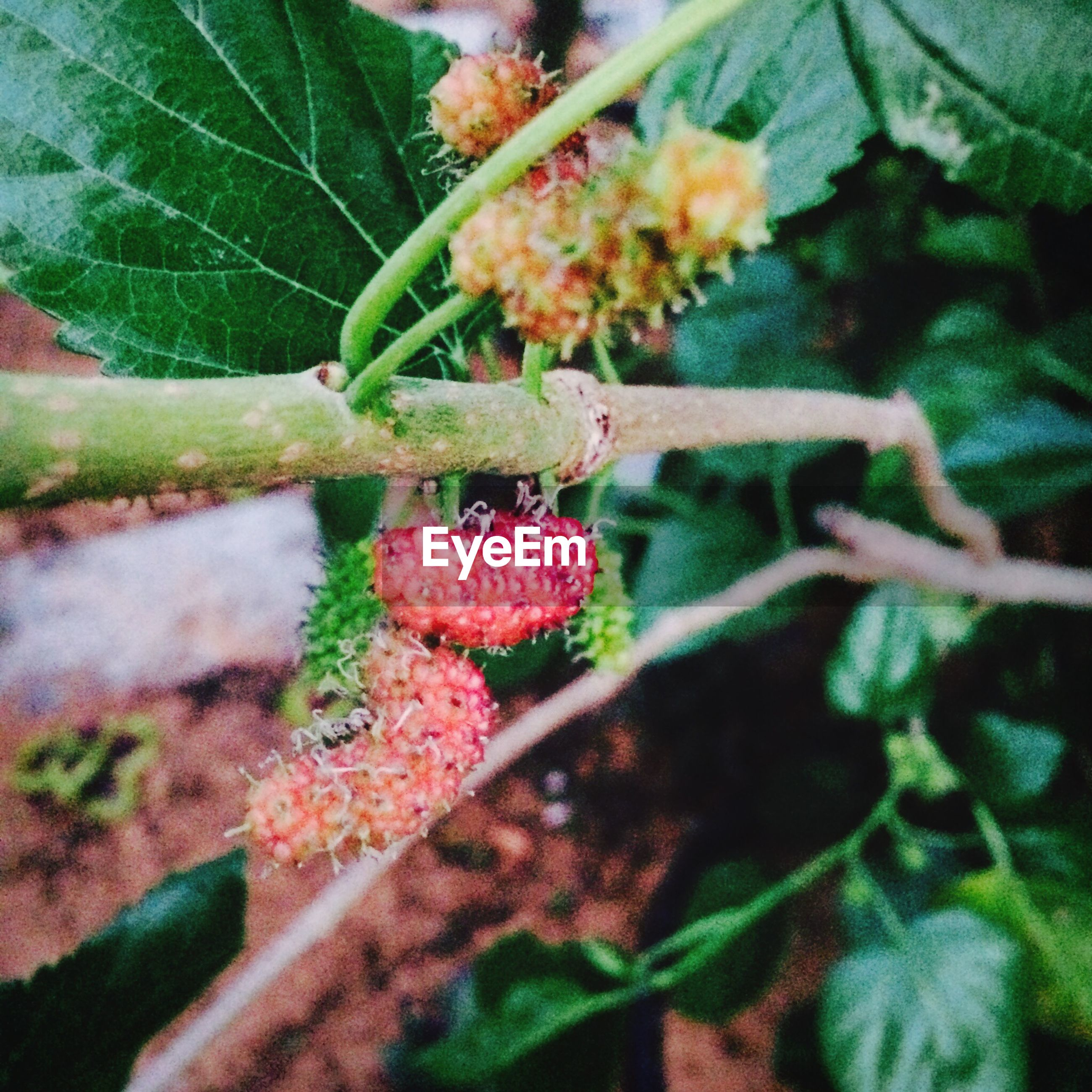freshness, leaf, fruit, growth, food and drink, plant, food, close-up, flower, healthy eating, red, nature, berry fruit, beauty in nature, focus on foreground, selective focus, green color, fragility, stem, outdoors