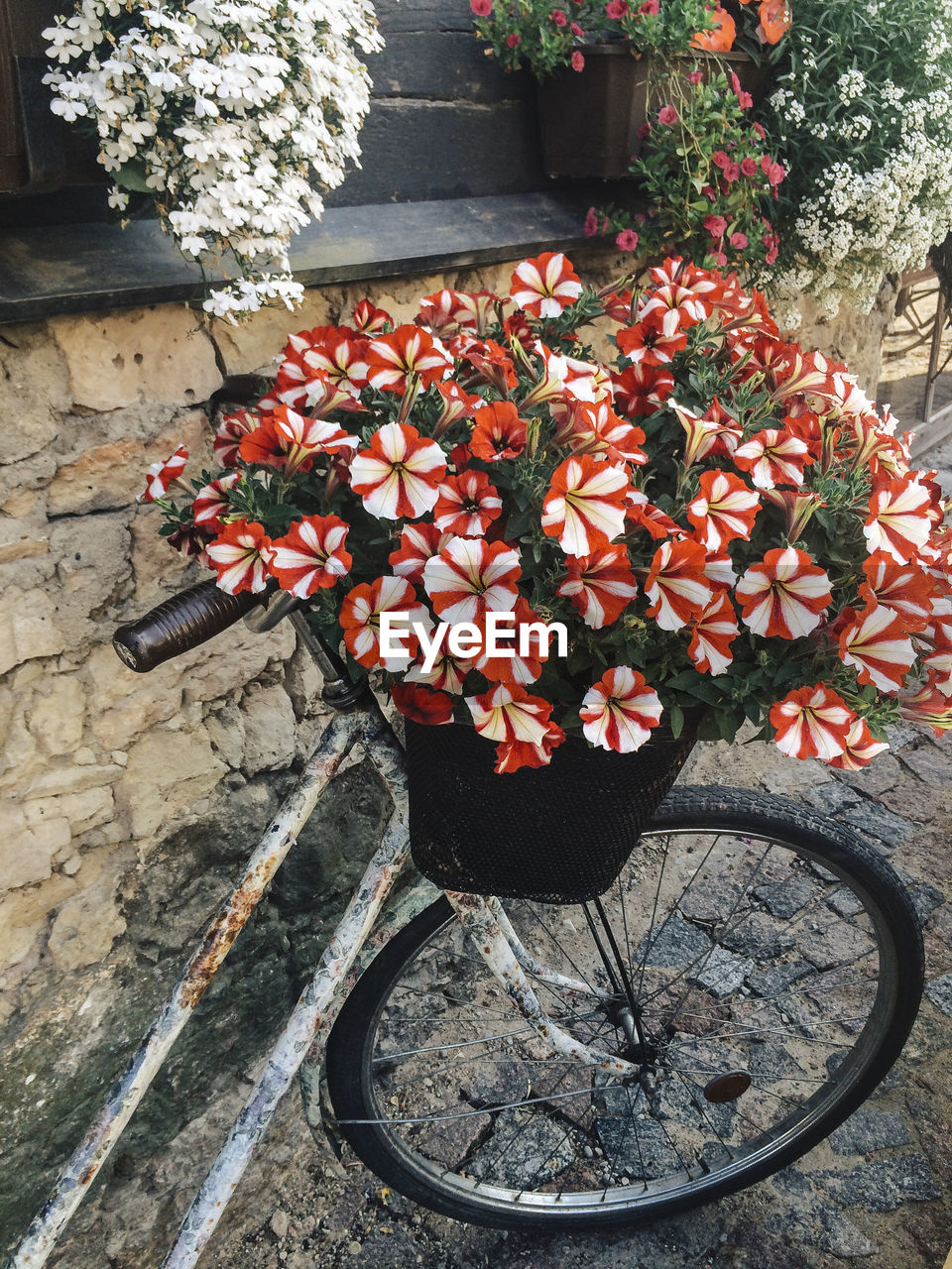 Bicycle with basket full of flowers
