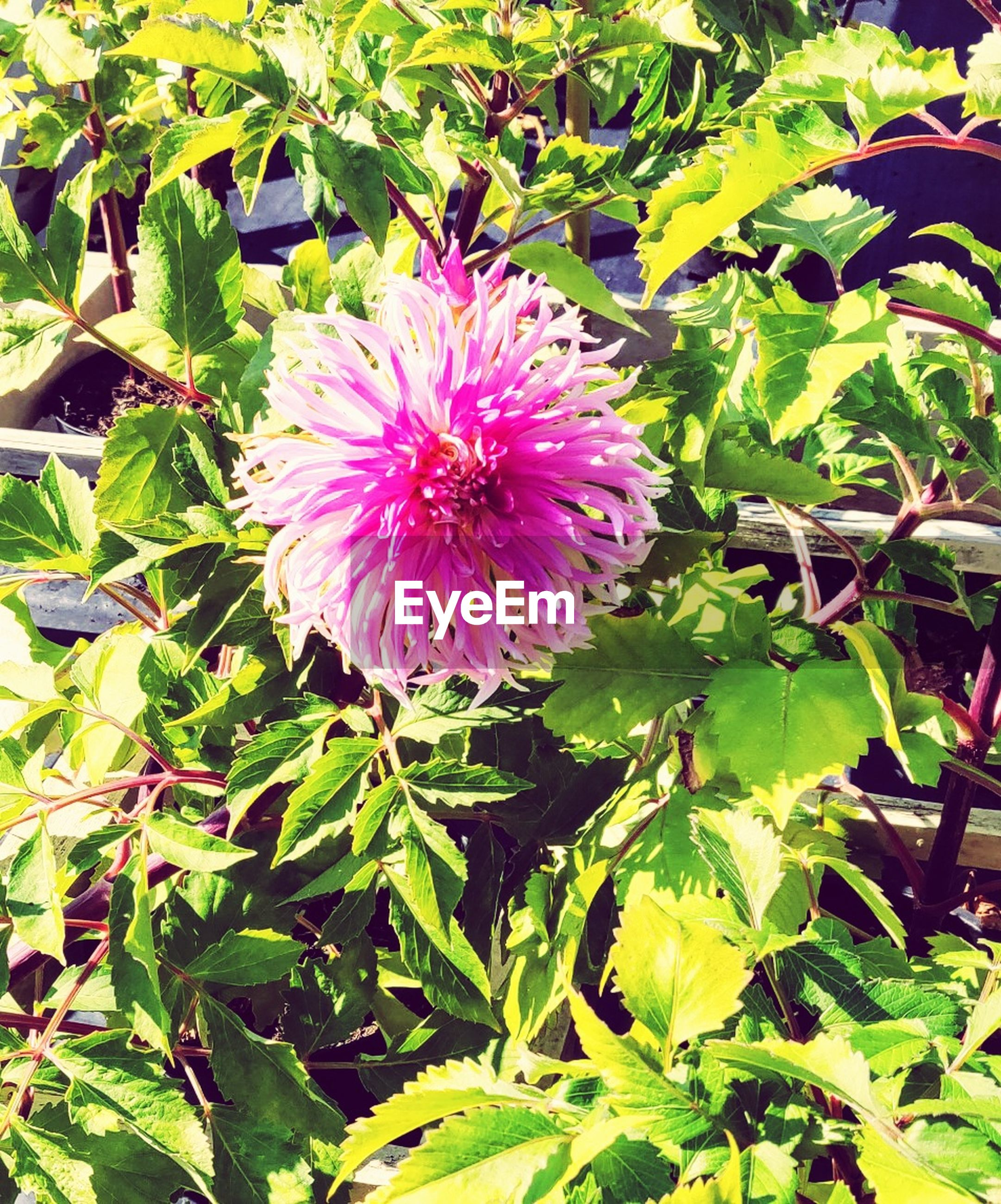 flower, plant, flowering plant, freshness, growth, beauty in nature, petal, fragility, flower head, leaf, inflorescence, plant part, vulnerability, close-up, pink color, nature, day, green color, no people, outdoors, springtime, purple, pollen