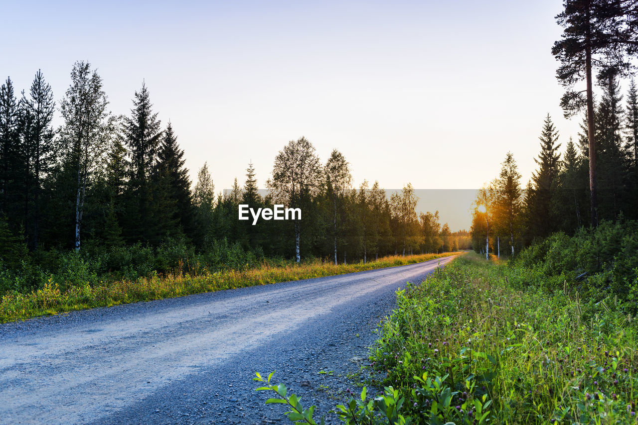 plant, tree, road, sky, beauty in nature, nature, growth, tranquility, transportation, tranquil scene, no people, scenics - nature, non-urban scene, land, the way forward, direction, landscape, green color, sunset, clear sky, outdoors