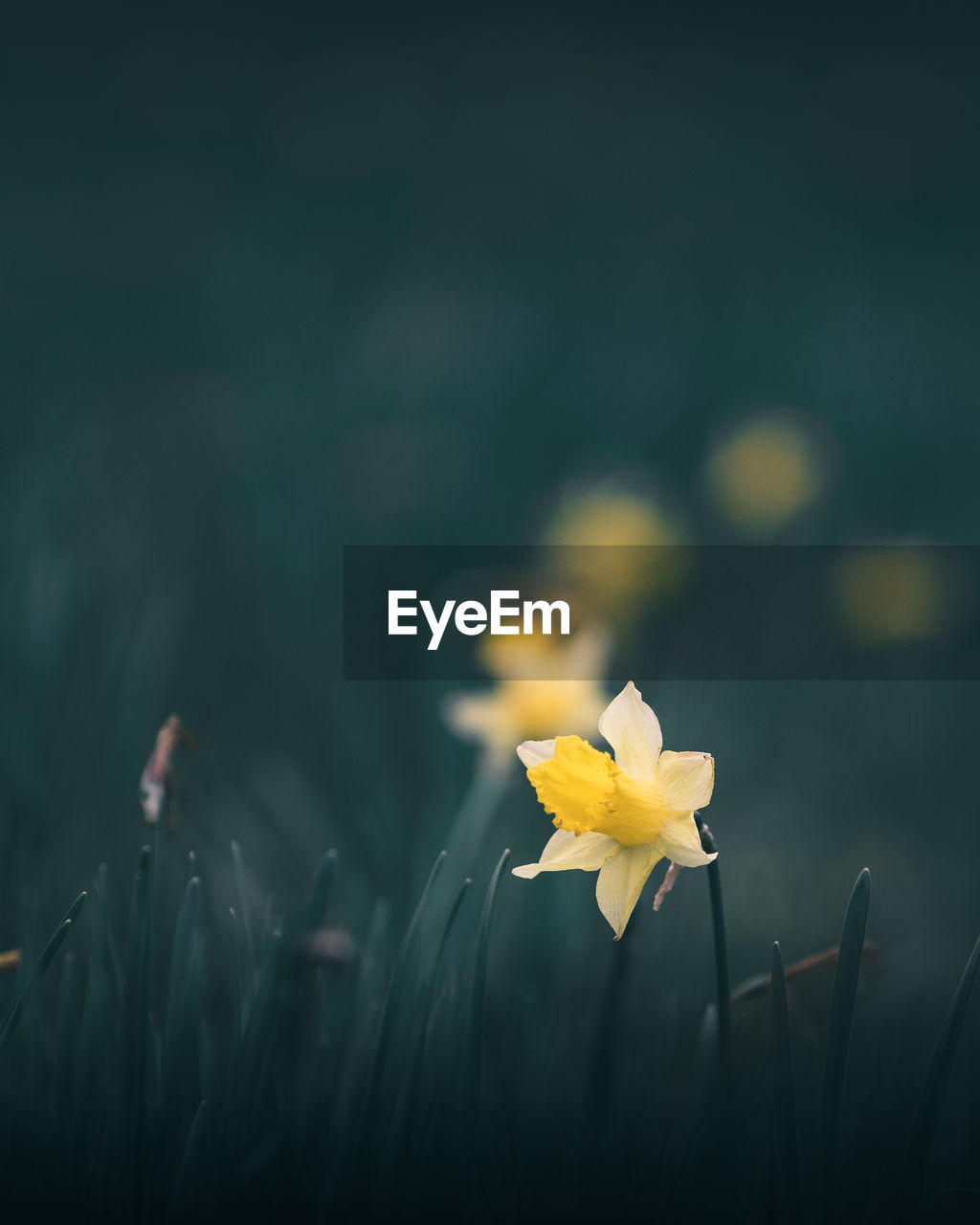 flowering plant, flower, plant, freshness, vulnerability, fragility, yellow, beauty in nature, growth, petal, flower head, close-up, inflorescence, nature, selective focus, no people, field, day, plant stem, focus on foreground, outdoors, pollen, blade of grass