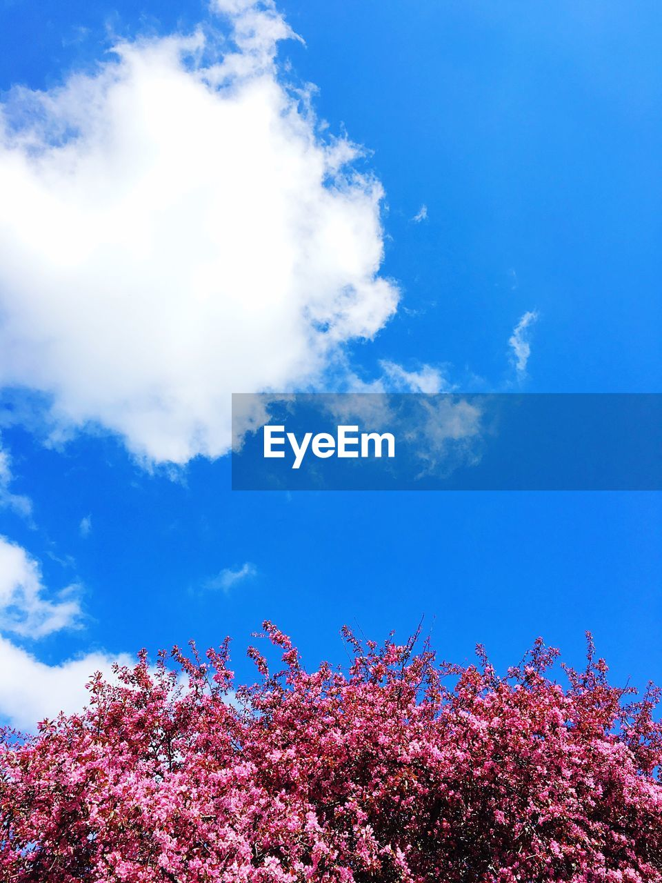 flower, growth, blossom, tree, beauty in nature, low angle view, nature, cloud - sky, sky, fragility, springtime, day, tranquility, freshness, blue, pink color, outdoors, no people