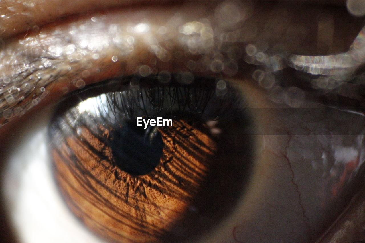 human eye, eyelash, eyeball, sensory perception, eyesight, close-up, iris - eye, real people, human body part, one person, indoors, day, people