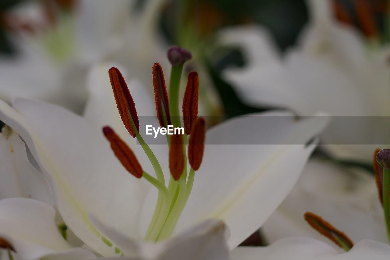 Close-up of flower pistils