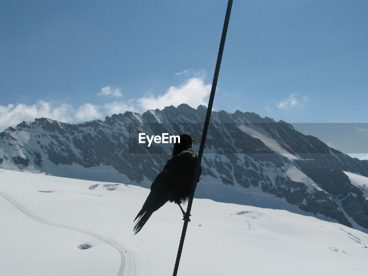 Bird Perching On Rope Against Jungfrau