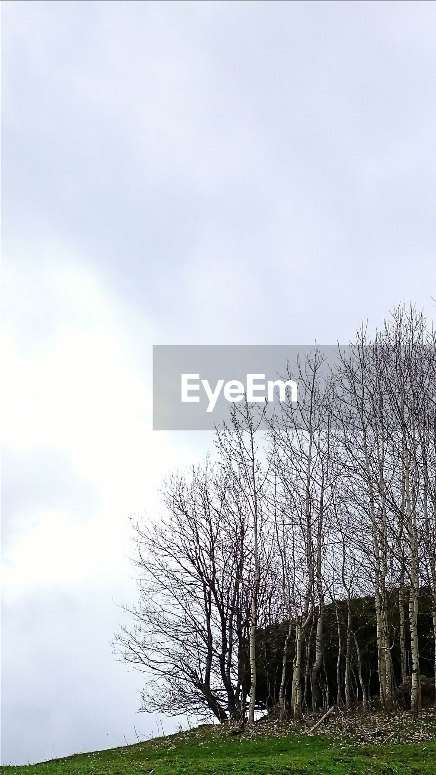 Low Angle View Of Bare Trees On Landscape