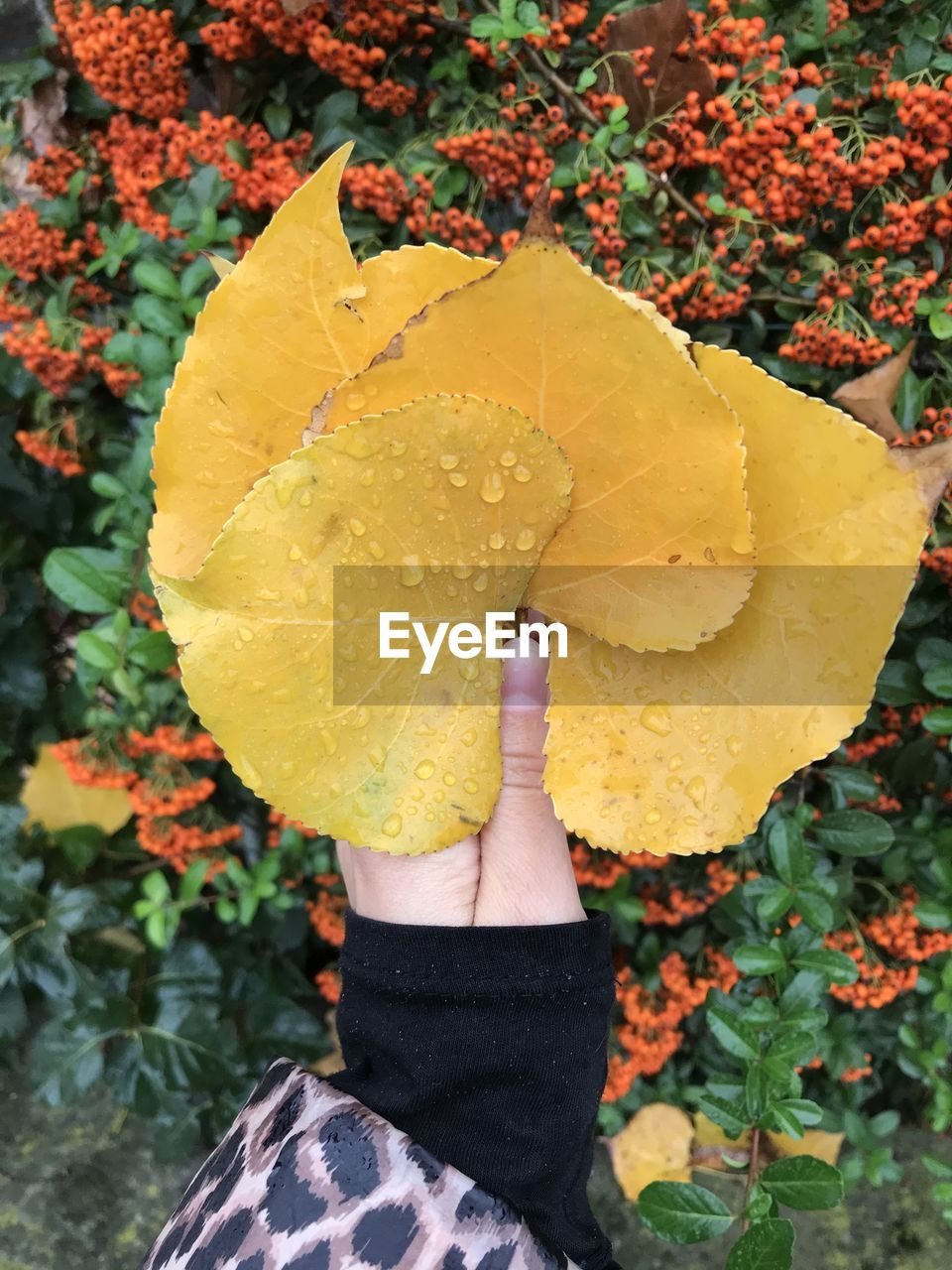 one person, yellow, real people, hand, human hand, leaf, human body part, holding, plant part, plant, nature, day, personal perspective, autumn, unrecognizable person, lifestyles, leisure activity, finger, body part, change, outdoors, leaves, human limb