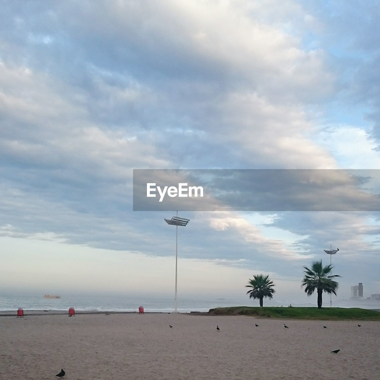 View of empty beach with two palm trees