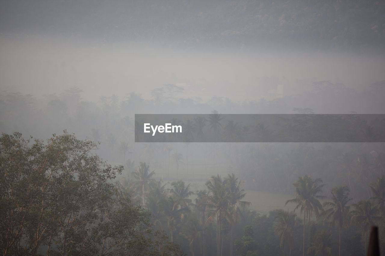 High angle view of trees in foggy weather against sky