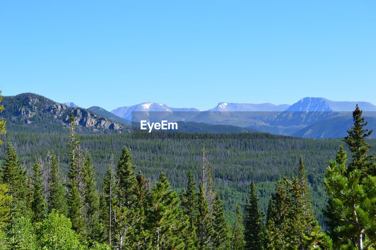 Landscape With Forest And Mountain Range