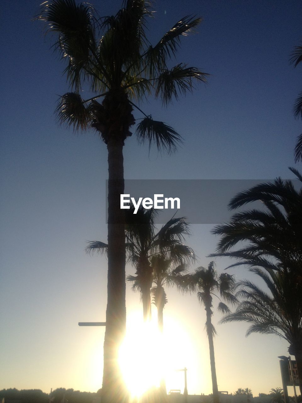 palm tree, tree, low angle view, tree trunk, nature, beauty in nature, growth, sunset, silhouette, outdoors, sky, scenics, tranquility, no people, clear sky, day