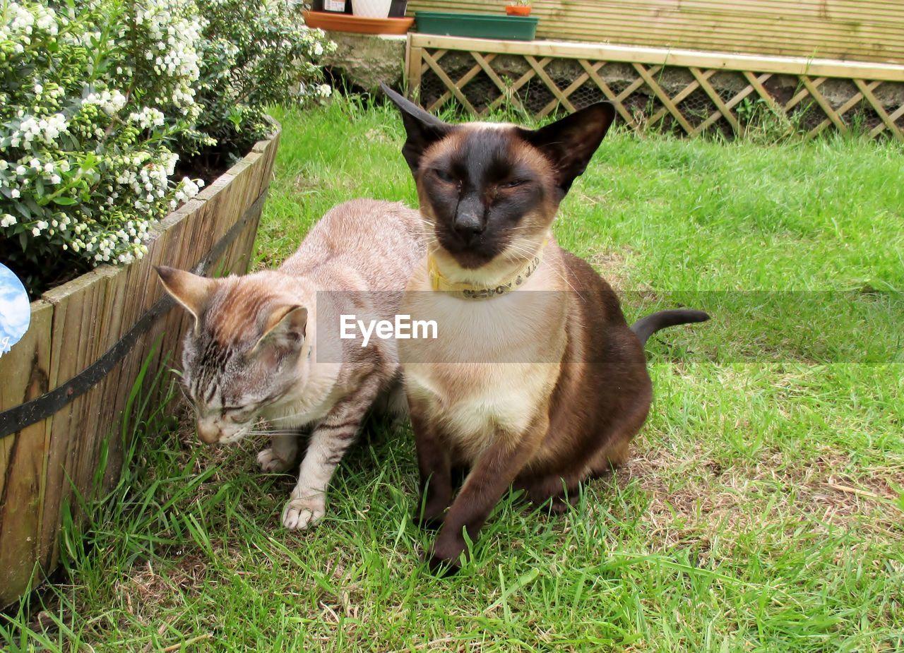 Two Cats On Lawn In Backyard, Potted Plant