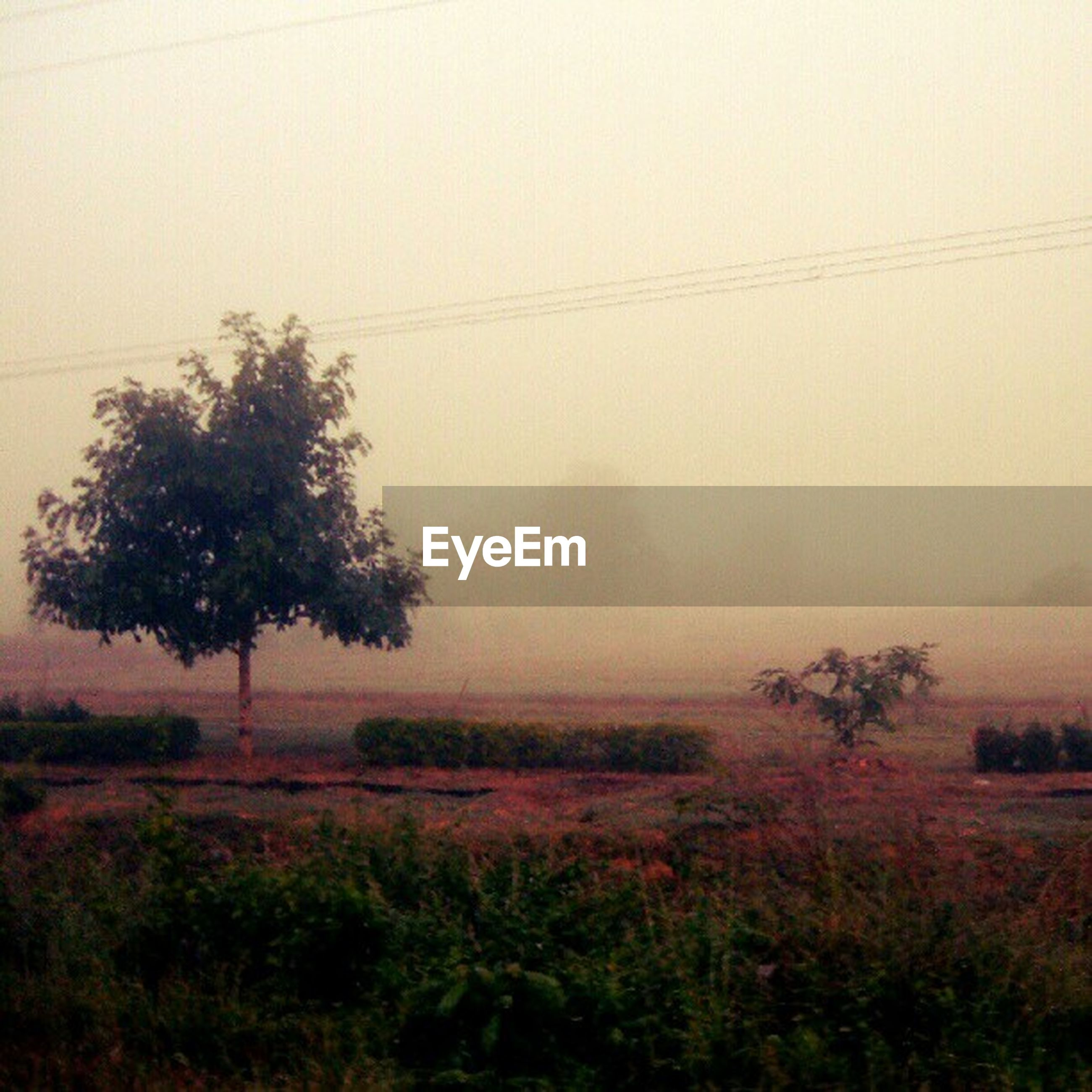 tranquil scene, tranquility, landscape, tree, power line, fog, field, nature, scenics, beauty in nature, electricity pylon, foggy, growth, sky, copy space, electricity, rural scene, non-urban scene, plant