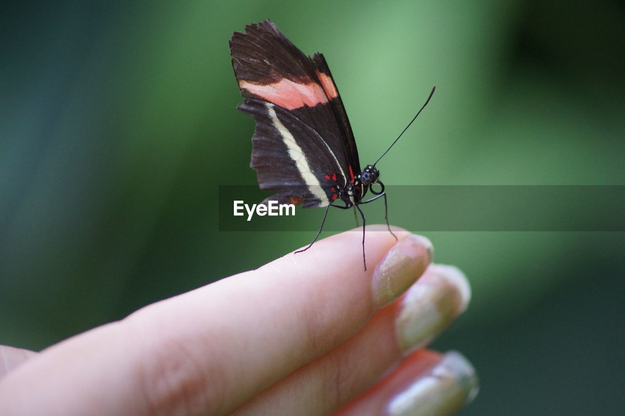 Close-Up Of Butterfly On Woman Finger