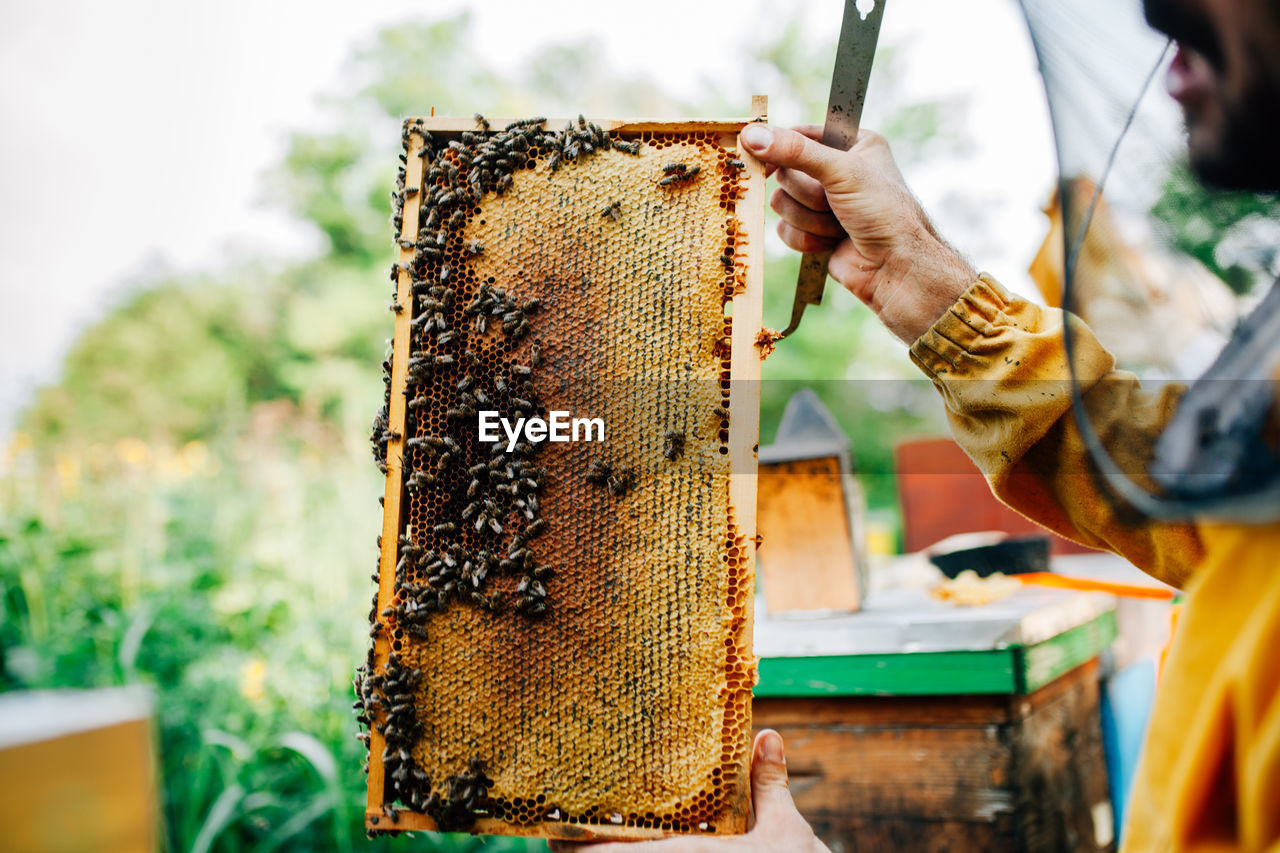 Cropped Image Of Beekeeper Holding Honeycomb