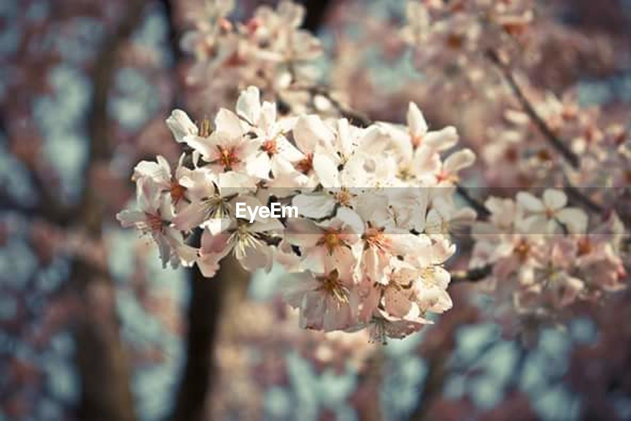 flower, blossom, fragility, nature, tree, focus on foreground, growth, close-up, beauty in nature, no people, day, springtime, petal, freshness, outdoors, branch, flower head