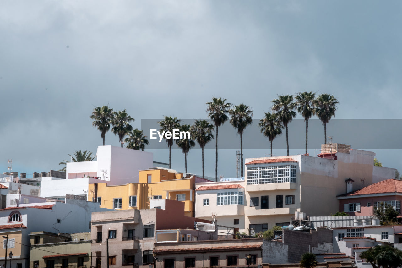HIGH ANGLE VIEW OF PALM TREES AND BUILDINGS IN CITY