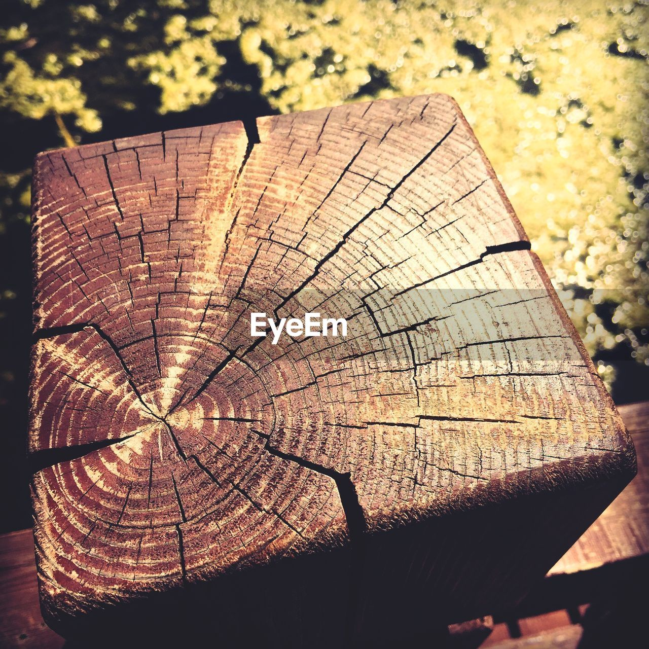 tree ring, deforestation, log, lumber industry, tree stump, timber, textured, wood - material, close-up, cross section, pattern, environmental issues, outdoors, day, nature, tree, no people, industry, forestry industry