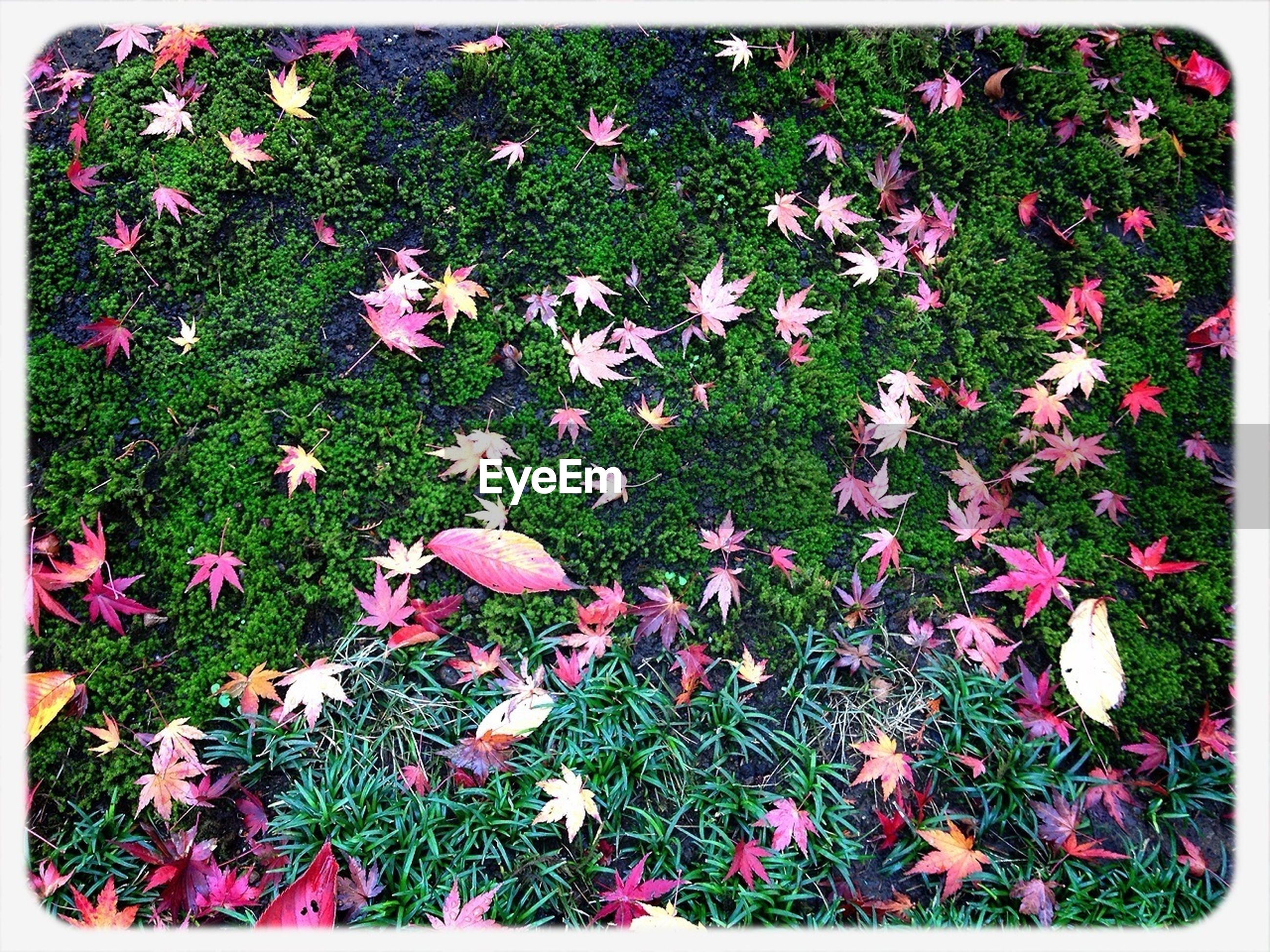 Autumnal leaves on grass