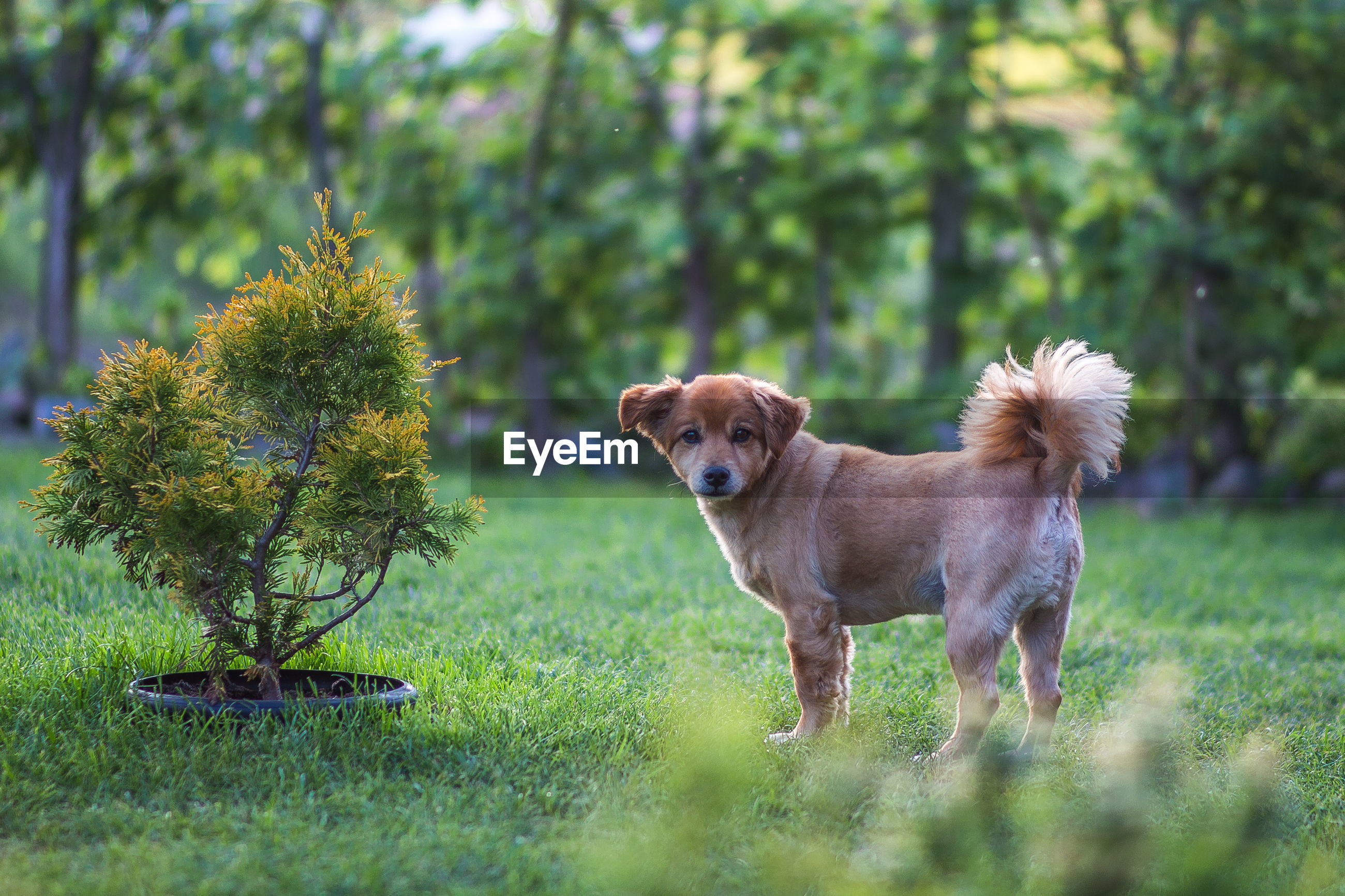Portrait of dog standing on grassy land