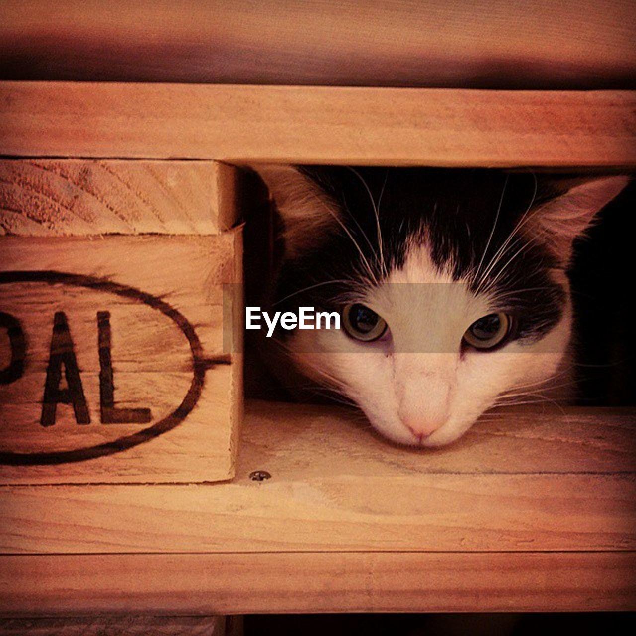Portrait Of Cat Peeking Through Wood